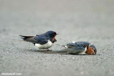 [Image: burung-6.jpg]