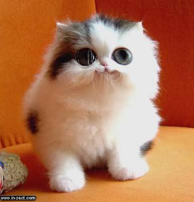 namun tetap saja sangat berbahaya apabila kucing ini te