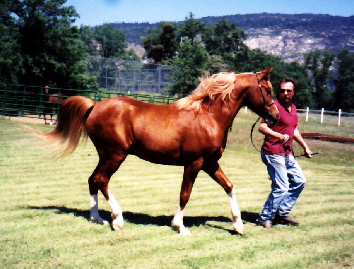Horse Breeding Woman