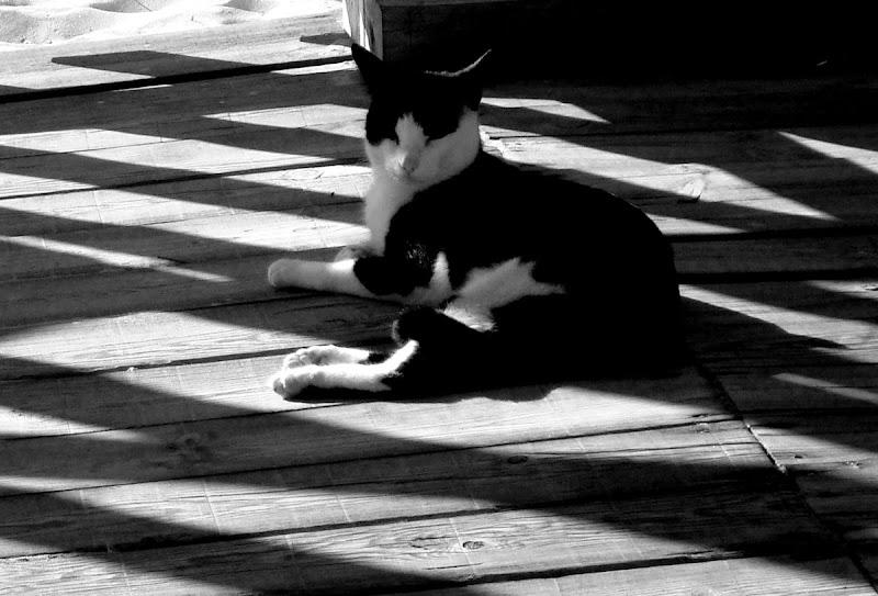Bela Vista 15NOV08 o gato