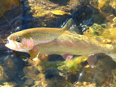 Nm news two fly rule is back jude duran jailed for New mexico state fish