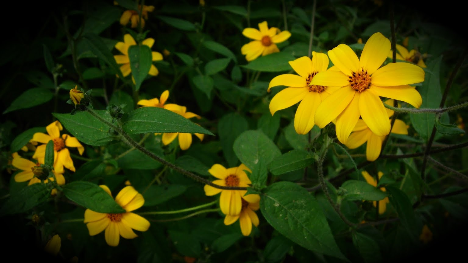 [Flora.jpg]