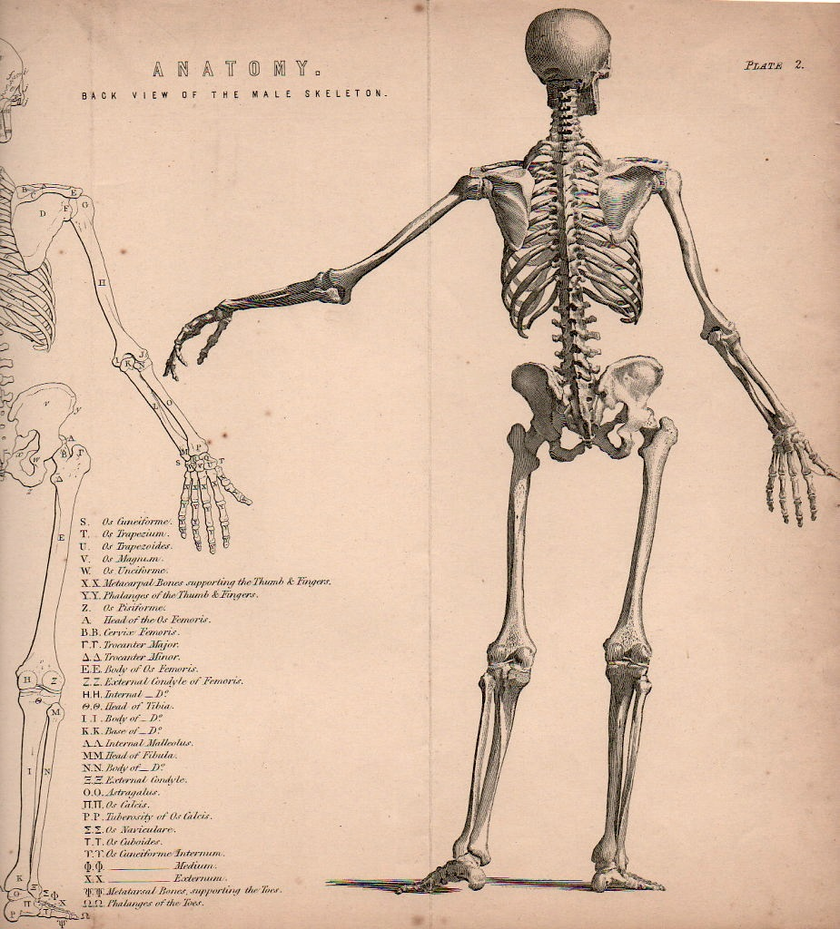 Uncategorized Skeletons Drawings figure drawing how to draw a skeleton skeletons for the bibliographisches institute leipzig founded 1826 in gotha by joseph meyer it moved 1874 this is probably form meyers