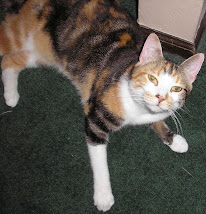 CALICO ROXIE