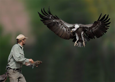 inspirational picture eagle bird catcher