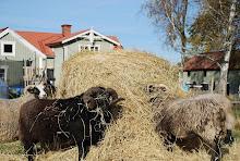 Våra Djur på gården