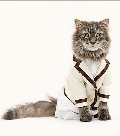 http://3.bp.blogspot.com/_rwmHhrnoXnI/TPyOGNFmy0I/AAAAAAAAAz8/rtz_rPdpB08/s1600/cat-fashion-show-4.jpg