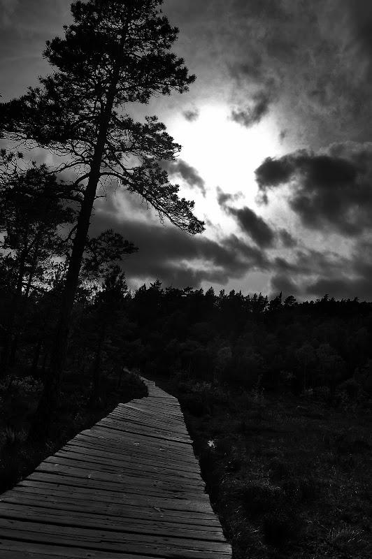 noruega blanco y negro madera arboles