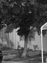 Nuestro amigo Fausto el árbol♥