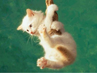 WALLPAPER-GAMBAR-ANIMAL-BINATANG: CAT JUMP