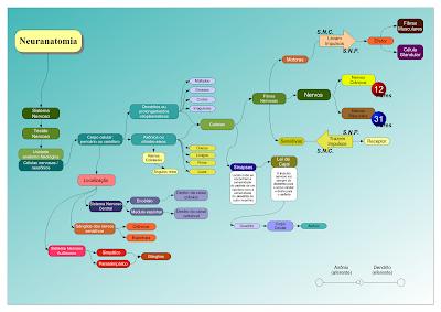 neuroanatomia, nervos, aferentes, eferentes