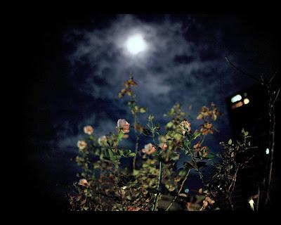 POEMAS SIDERALES ( Sol, Luna, Estrellas, Tierra, Naturaleza, Galaxias...) - Página 2 Moon+flowers