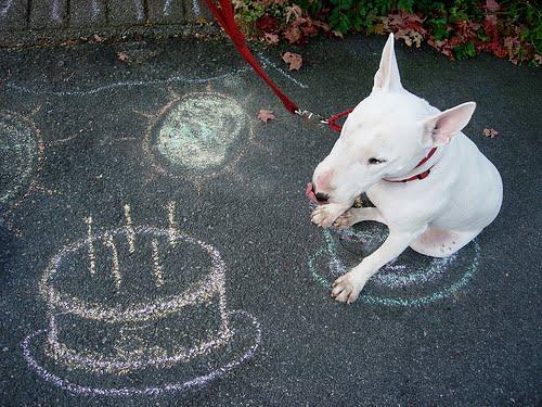[birthday_dog]