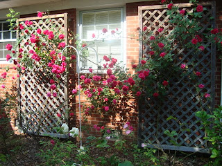 She Has Her Rose Garden In The Back Bushes More Like Shrubs Front And Roses On All Sides Of House Did I Mention Loves