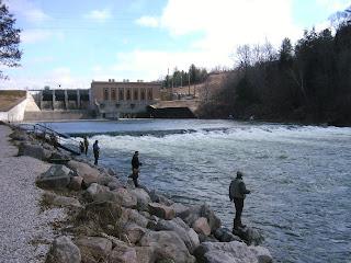 Michigan steelhead report fishing at tippy dam north side for Tippy dam fishing