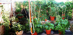 "Our ""Jungle"" garden paradise"