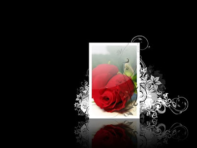 i love u rose wallpaper. i love u wallpaper. love