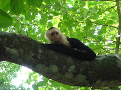 Monkey in Manuel Antonio, Costa Rica