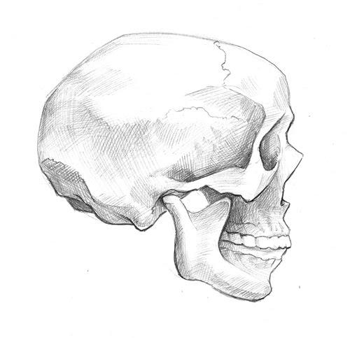 [skullsketch2]