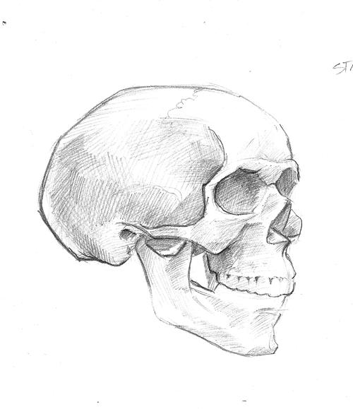 [skullsketch3]