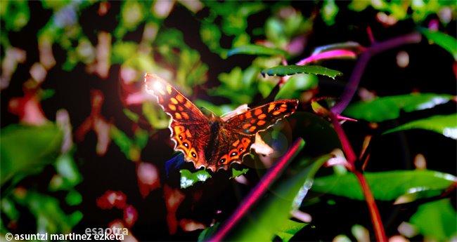 Mariposa [haz click sobre la imagen para verla ampliada]