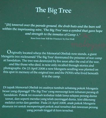 Sandakan The Big Tree