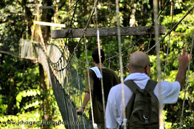 Canopy Walk at Mulu National Park Sarawak