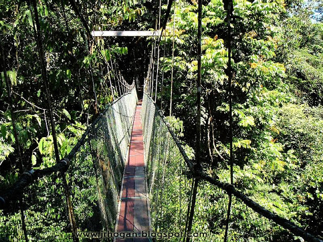 Malaysia Borneo Skywalk Photo