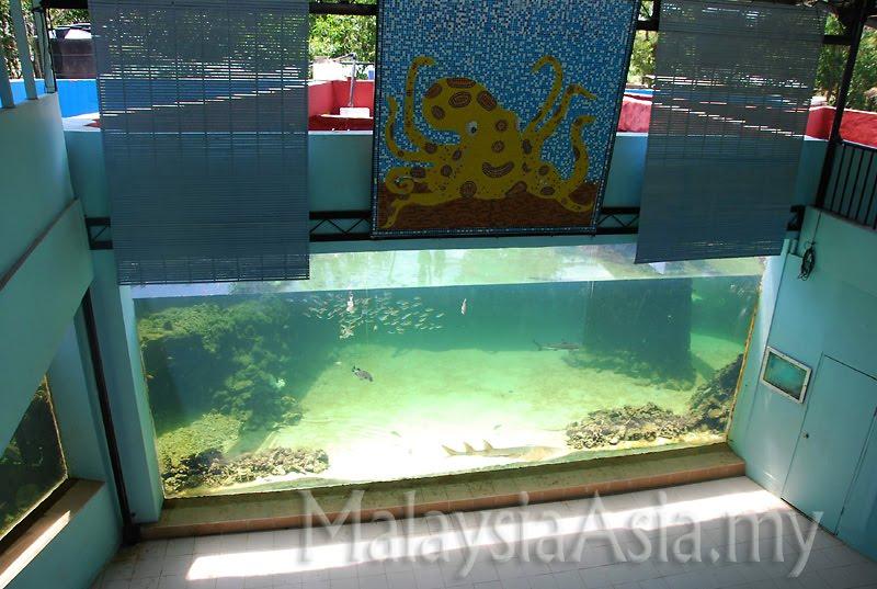 The green connection in kota kinabalu sabah malaysia asia for Floor aquarium