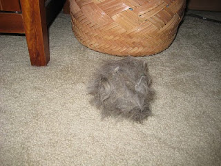 big hairball from grooming cat