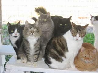 cats of Belleglen Sanctuary