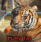 Putty Tat