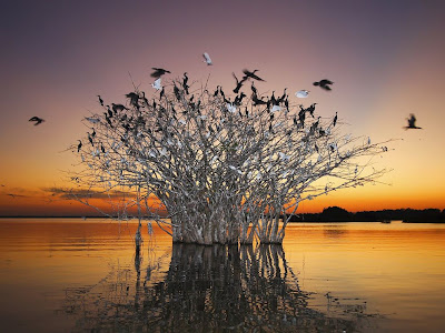 nature_photography_wallpaper_pantanal_brazil_photography
