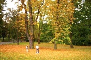 オロモウツ旧市街を取り巻く緑地帯で、木の実を拾う兄妹