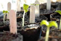 Photo Potted Seedlings