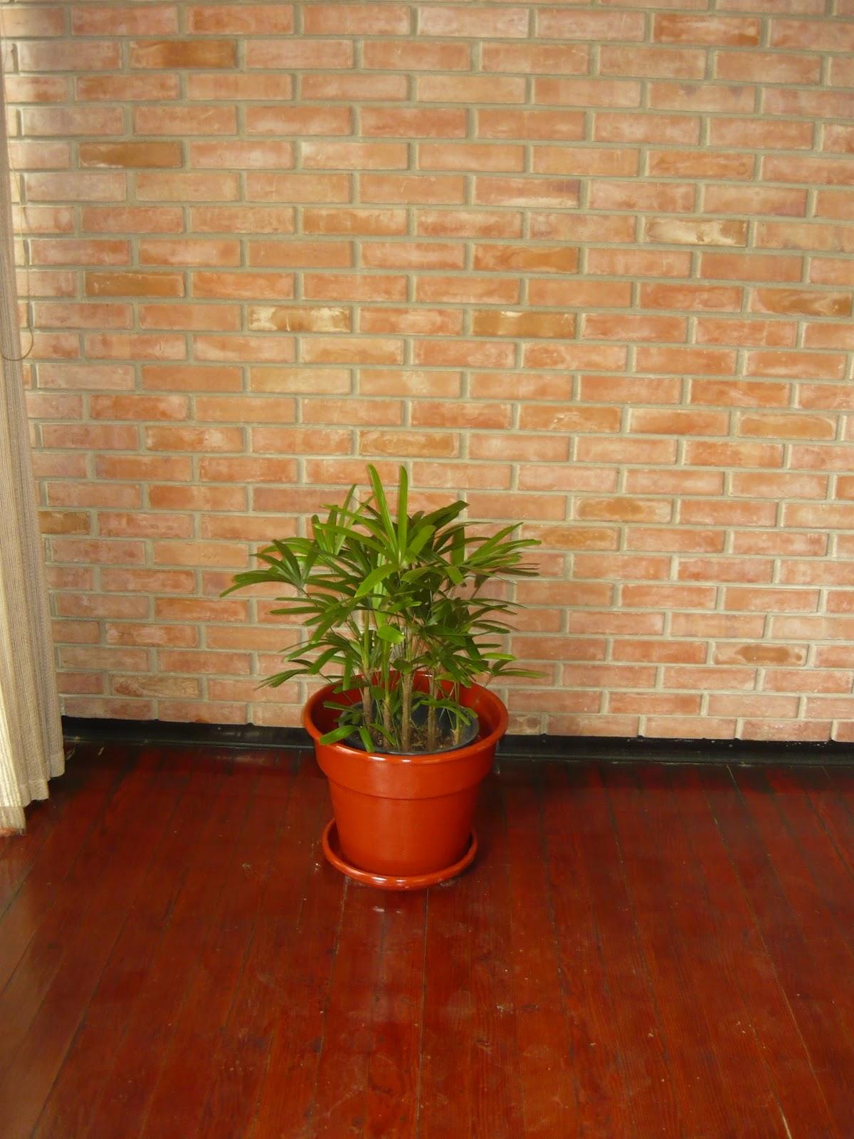 Plantas de interior macetas medianas for Plantas de interior duraderas