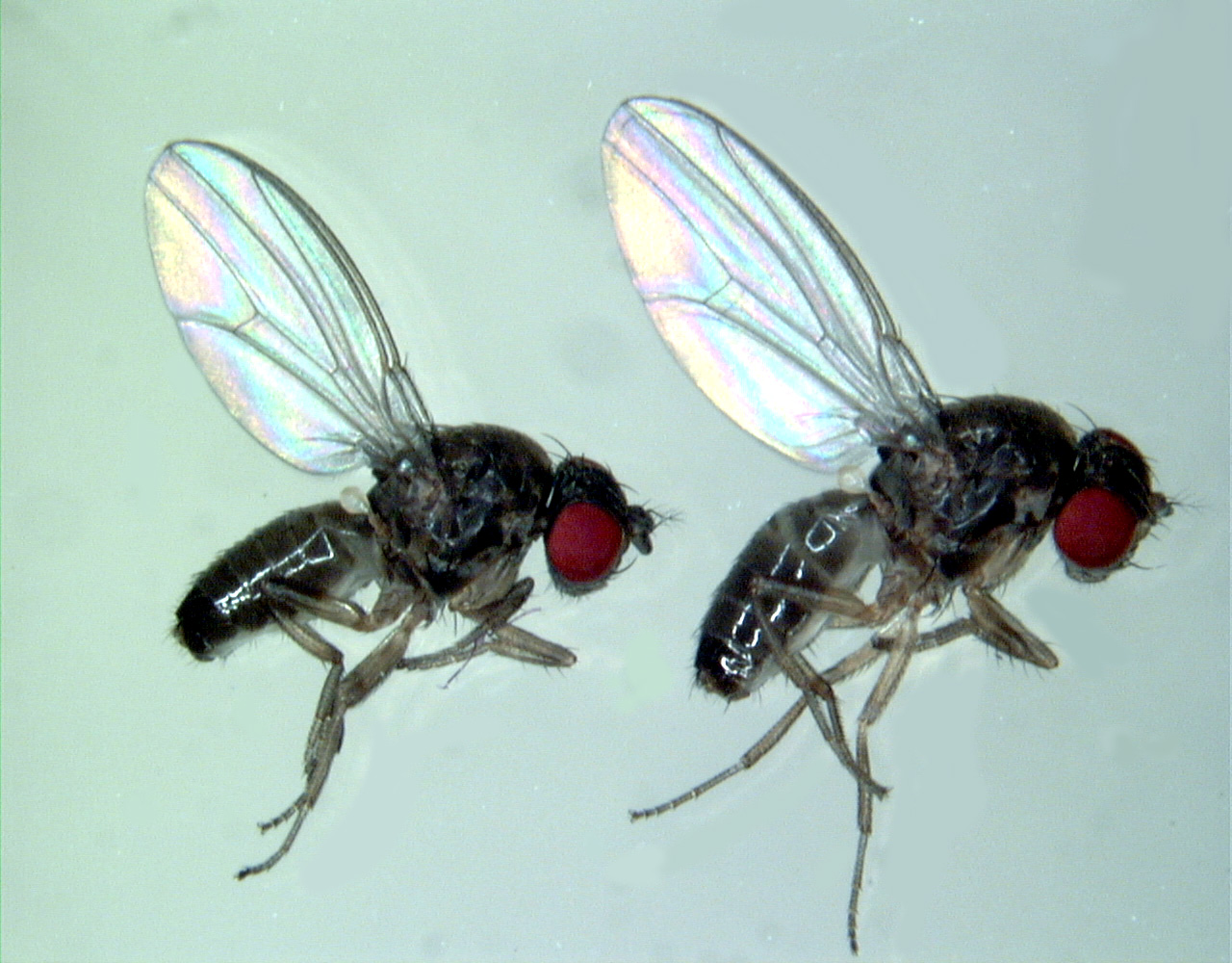 kill flies - 28 images - how to kill fruit flies and prevent them ...