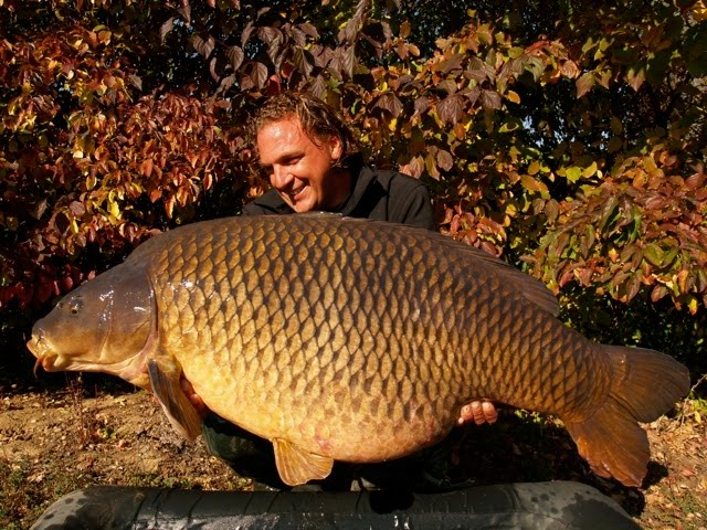 Record Common World Record Common Carp '