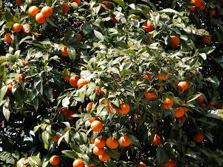 oranges, rome, rome en images, italie