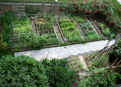 Very Own Garden From Seeds