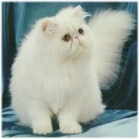 Gambar_kucing_Lucu