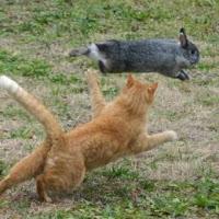 Gambar_kucing_berburu