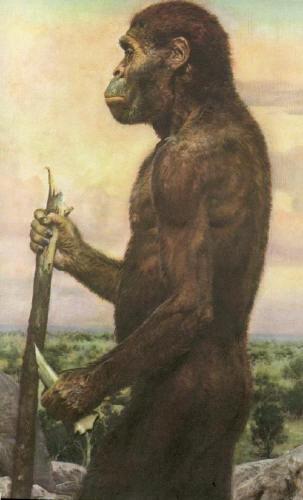 sejarah perkembangan dan koleksi gambar manusia purba