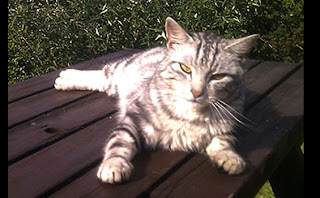 Memburu Jejak HANTU Dengan Bantuan Kucing