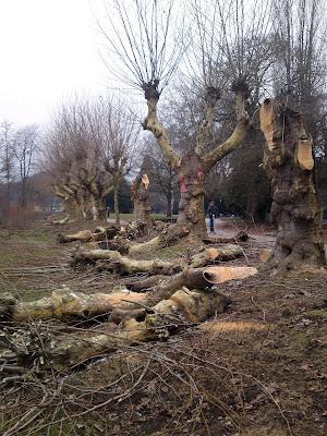 trees,  pollards