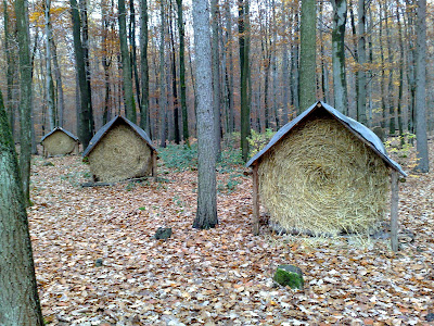 hay bails, woods