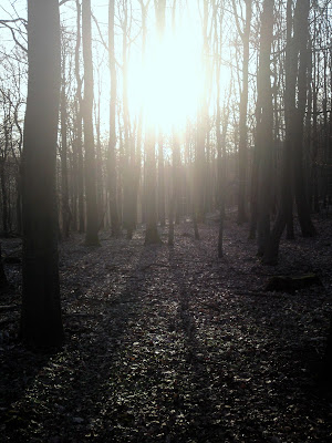 sun, trees,