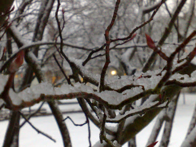 lights, snow, twigs