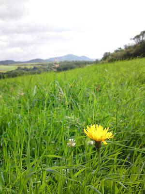 hills, dandelion,