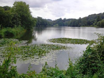 lake,  lilies